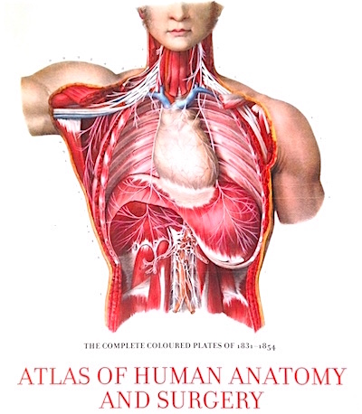 Atlas Of Human Anatomy & Surgery